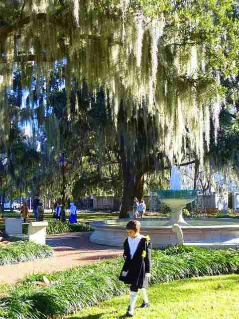 Savannah (3)