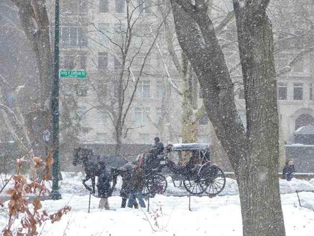 central-park-snow (5)