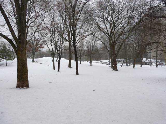 central-park-snow (8)