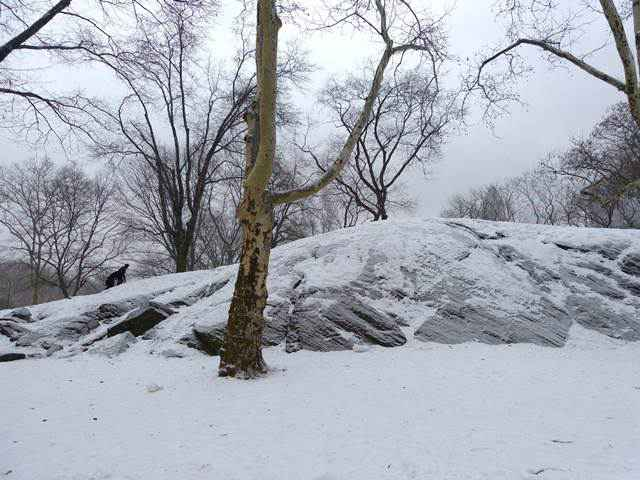 central-park-snow (9)