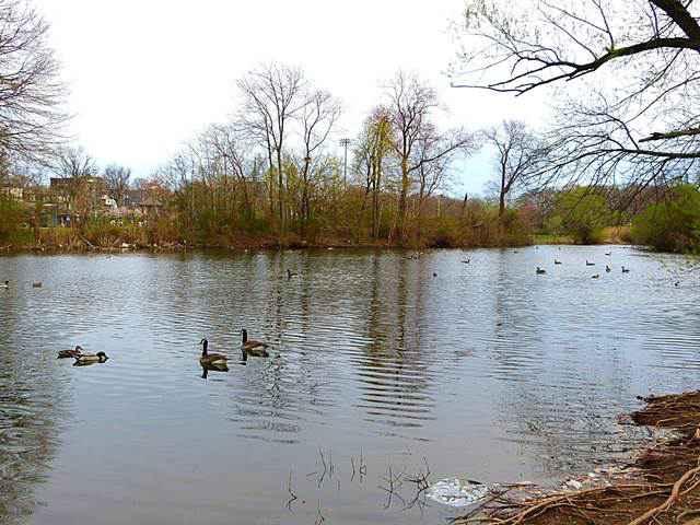 Branch Brook Park (3)