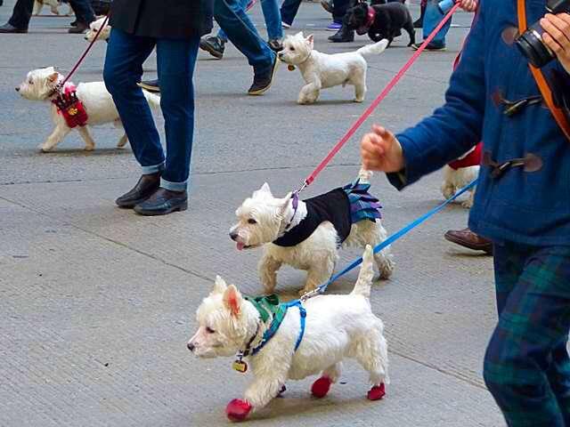 Tartan Day Parade NYC (18)