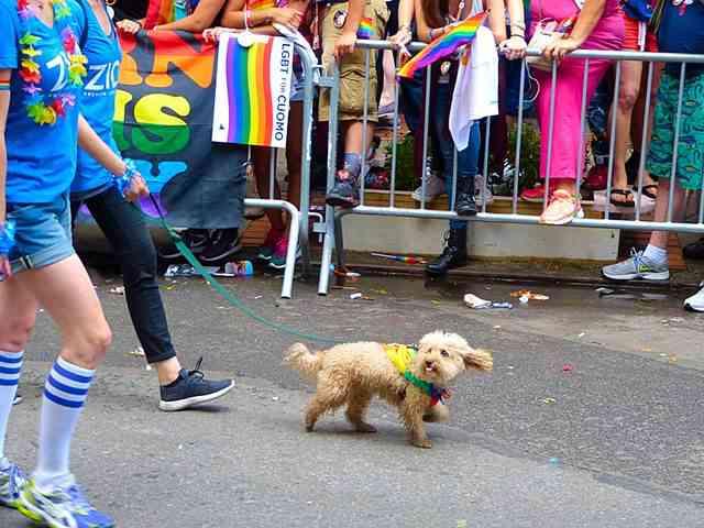 PrideParadeNYC (10)