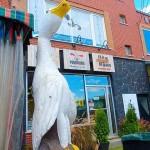 Boutique Canards du Lac Brome (2)