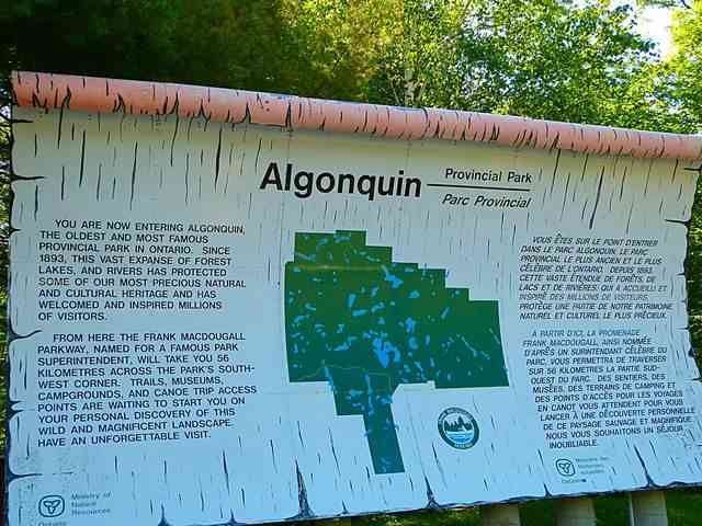 Algonquin (19)