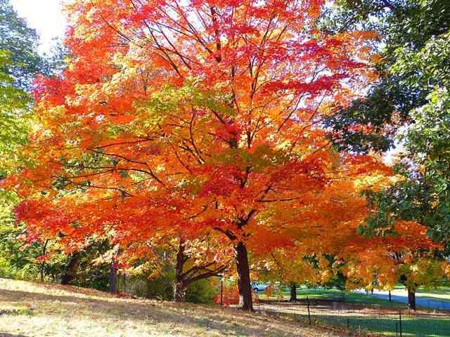 central-park-fall- foliage (1)