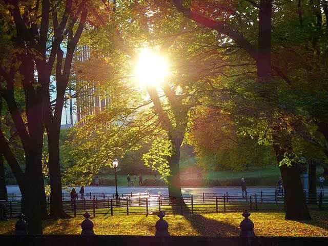 central-park-fall- foliage (13)