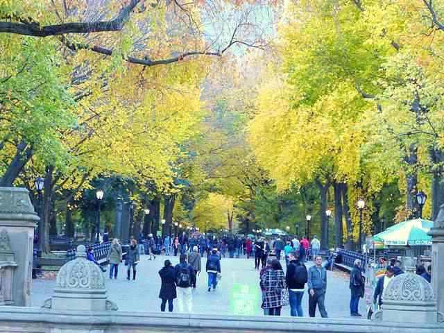 central-park-fall- foliage (14)