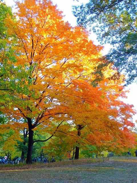 central-park-fall- foliage (17)