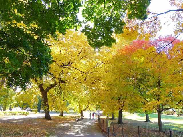 central-park-fall- foliage (2)