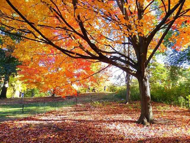 central-park-fall- foliage (22)