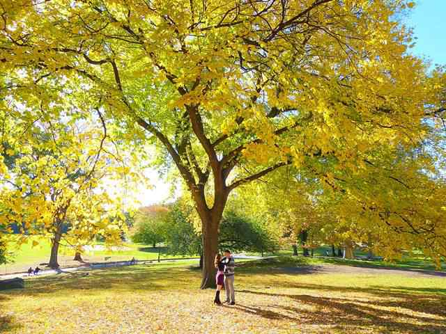 central-park-fall- foliage (3)