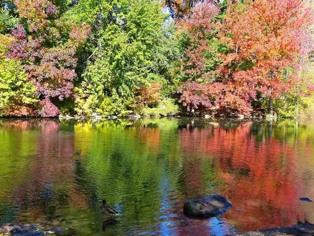 central-park-fall- foliage (5)
