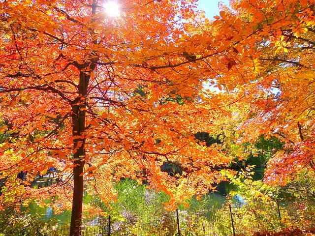 central-park-fall- foliage (6)