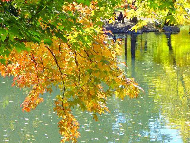 central-park-fall- foliage (7)
