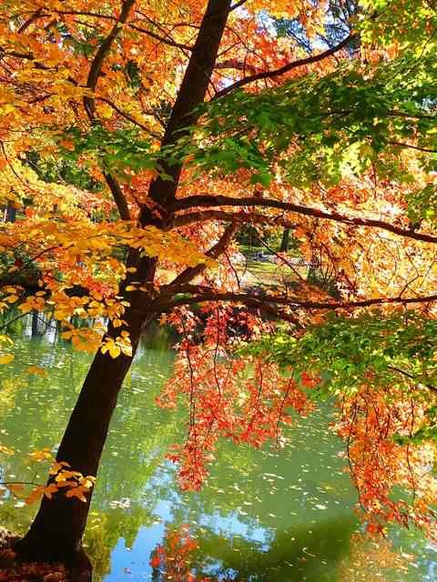 central-park-fall- foliage (8)