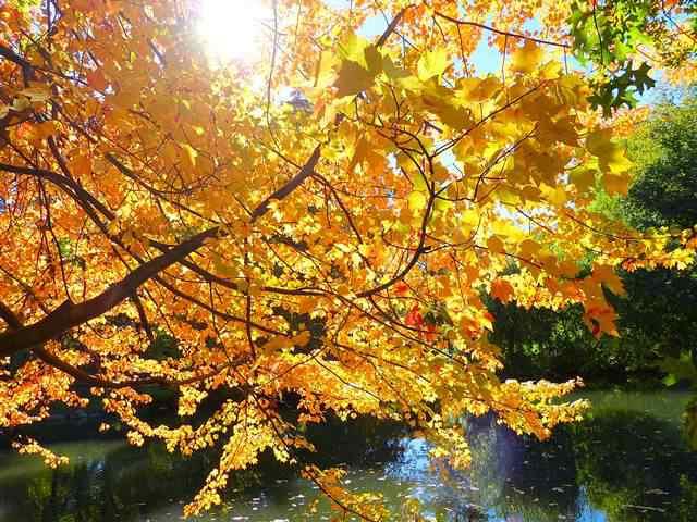 central-park-fall- foliage (9)
