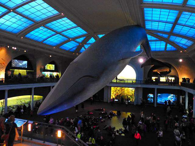 American Museum of Natural History (1)