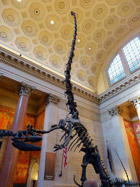 American Museum of Natural History (12)