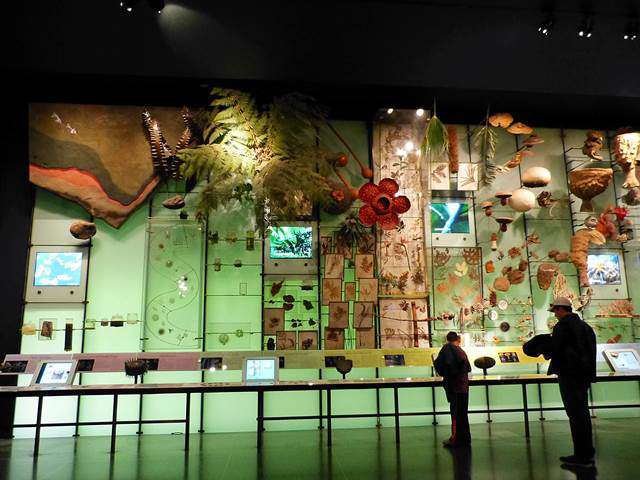 American Museum of Natural History (23)