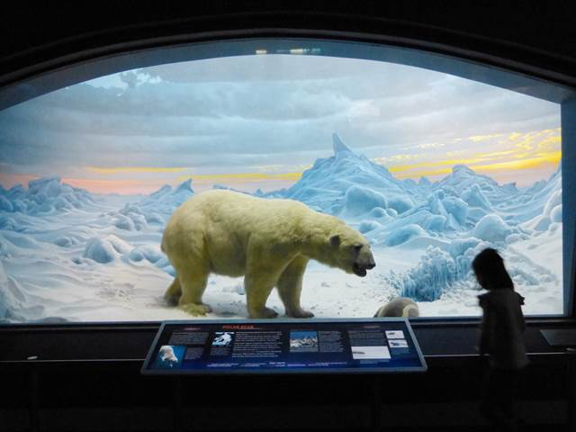 American Museum of Natural History (24)