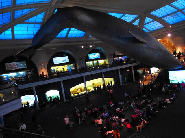 American Museum of Natural History (26)