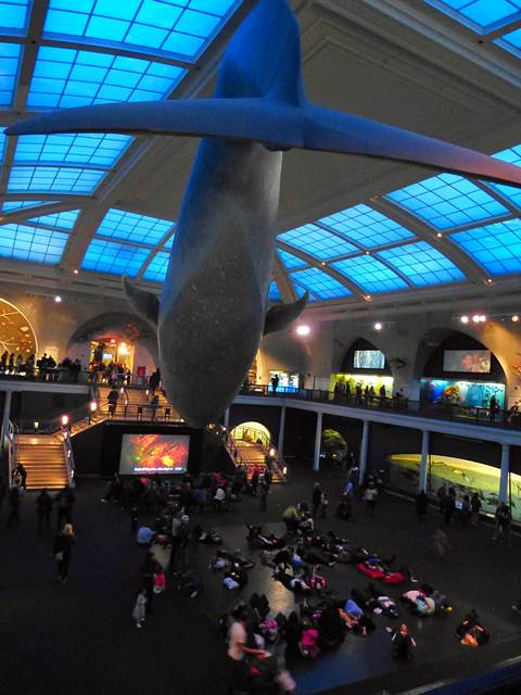 American Museum of Natural History (27)