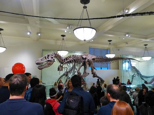 American Museum of Natural History (5)