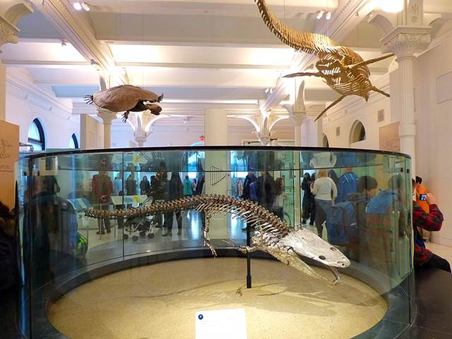 American Museum of Natural History (8)
