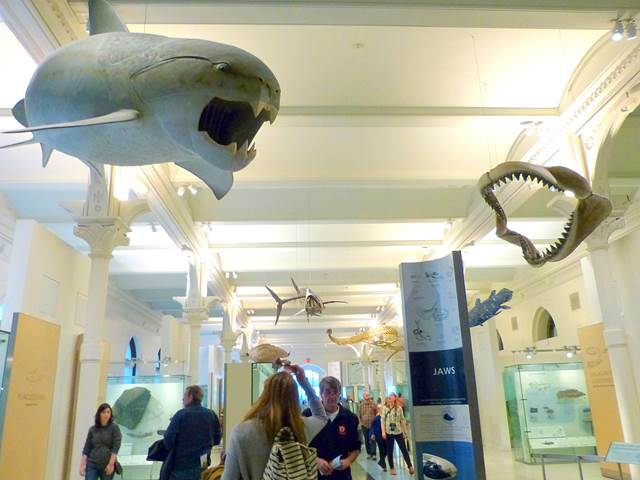 American Museum of Natural History (9)