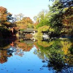Brooklyn Botanic Garden autumn (17)