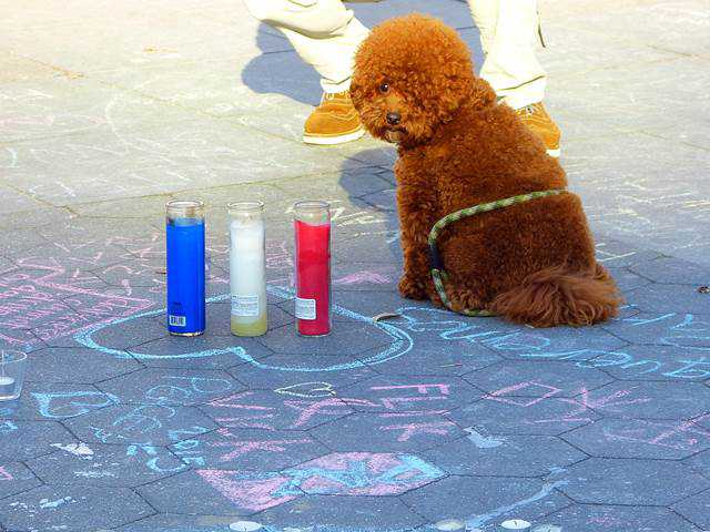 vigil-washington-square-park (5)