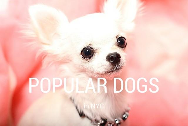 POPULAR DOGS