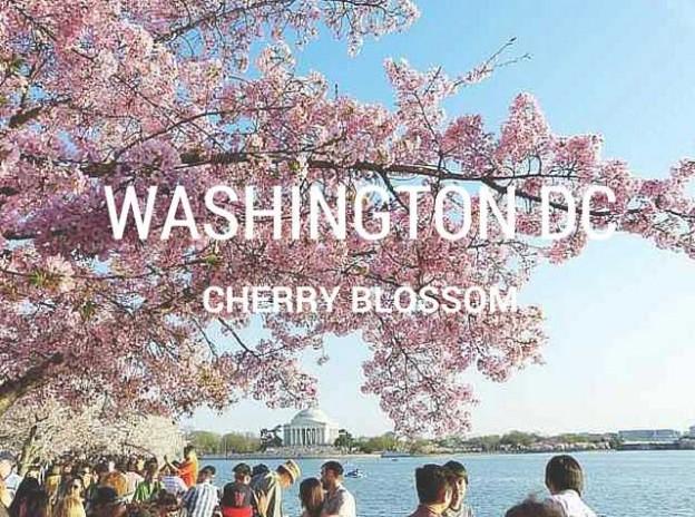 WashingtonDCCherryblossom