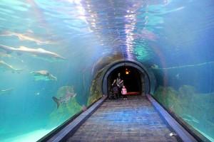 Adventure Aquarium (1)