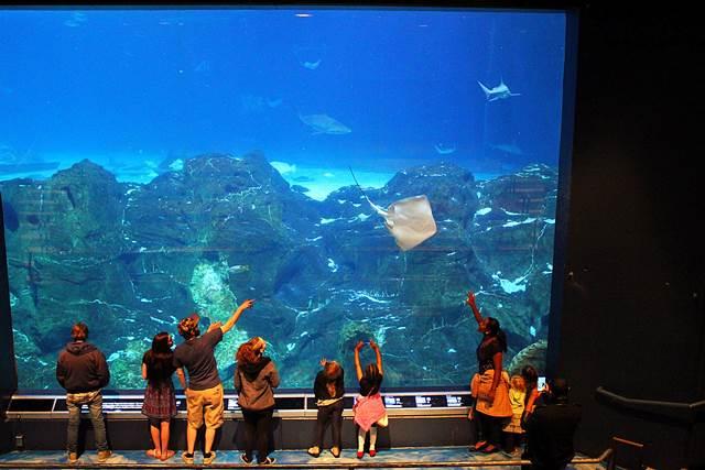 Adventure Aquarium (14)