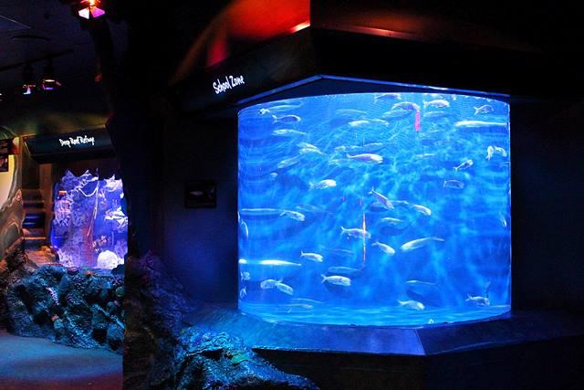 Adventure Aquarium (15)
