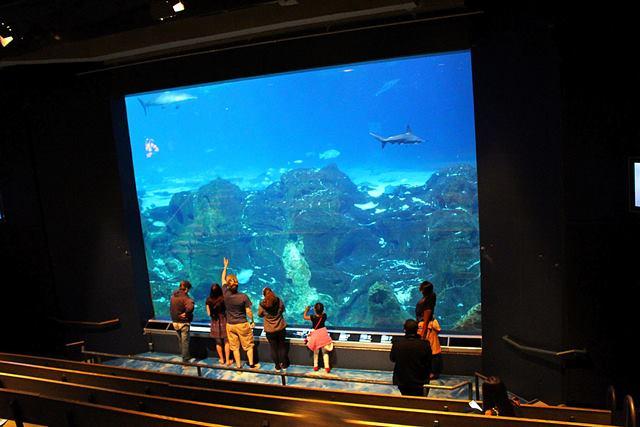 Adventure Aquarium (16)