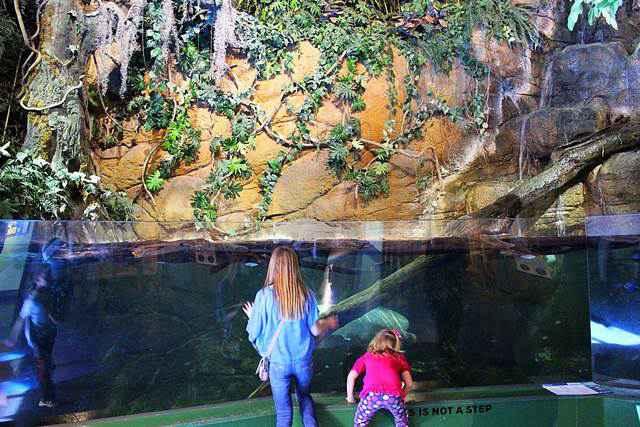 Adventure Aquarium (19)