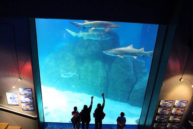 Adventure Aquarium (2)
