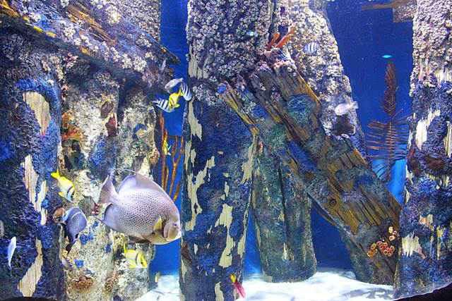 Adventure Aquarium (3)