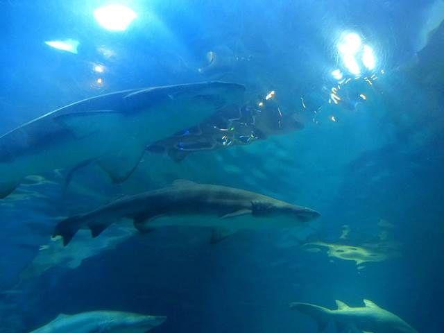 Adventure Aquarium (4)