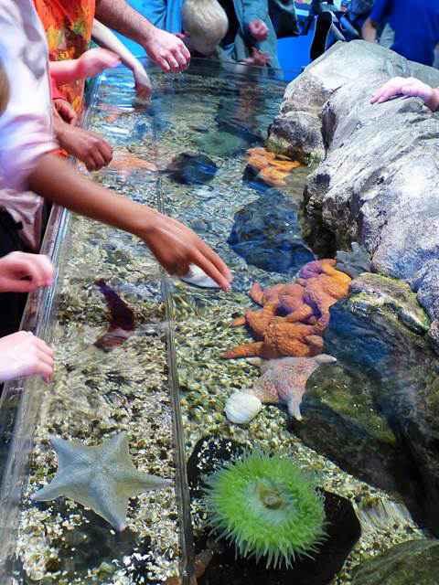 Adventure Aquarium (8)