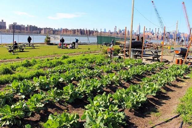 North Brooklyn Farms (1)