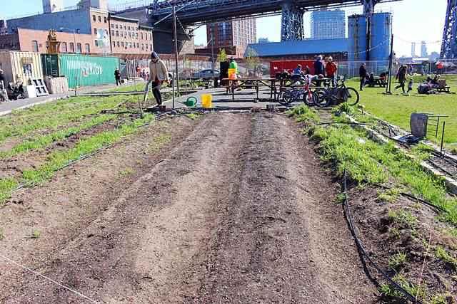 North Brooklyn Farms (11)