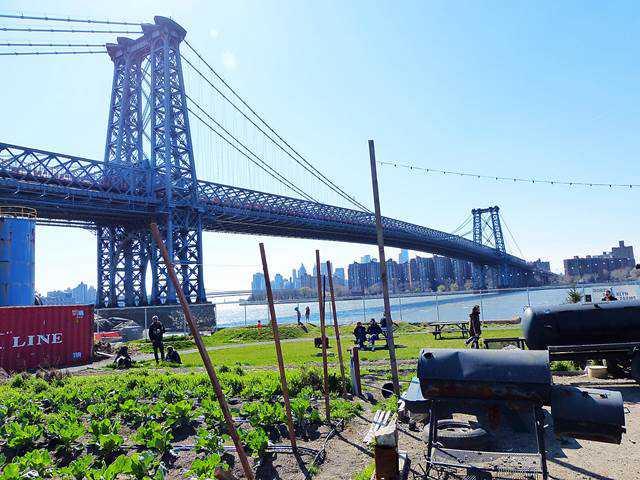 North Brooklyn Farms (12)