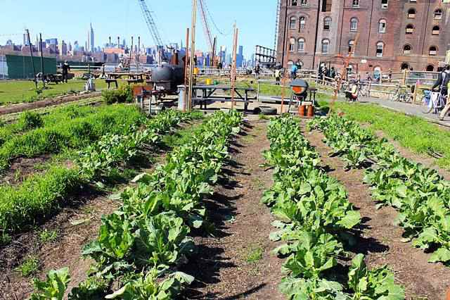 North Brooklyn Farms (2)