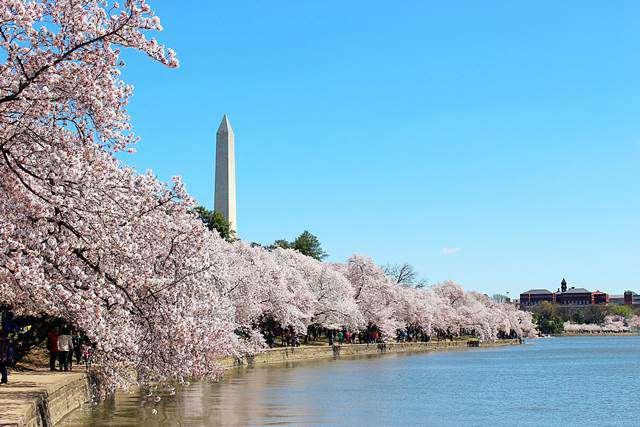 Petite New YorkワシントンDC 桜祭りと桜の開花予報 20162016年 ワシントンDC 桜の開花ピークの時期ワシントンDC 桜のみどころワシントンDC 桜祭り