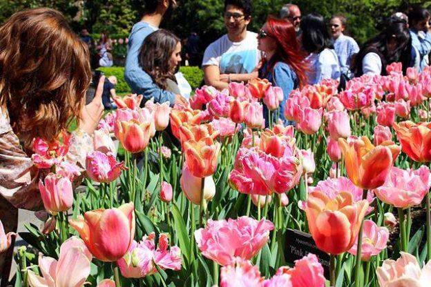 Brooklyn Botanic Garden Spring (1)