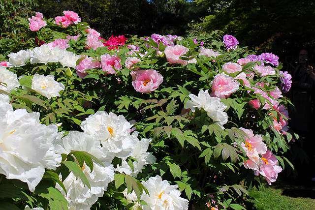 Brooklyn Botanic Garden Spring (12)